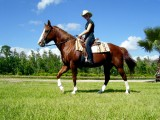 Horse Riding Tours in Pamukkale